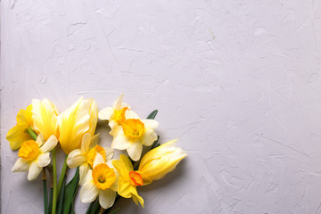 Yellow narcissus and tulips  flowers on grey  background.