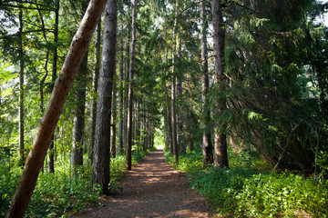 Green tree lined forest path
