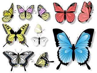 11匹の蝶々