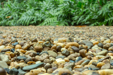 Nice soft lighting on the jungle greenery above, while colorful and assorted pebbles contrast the thick vegetation below. This lush and clean environment has a conceptual meaning about life.