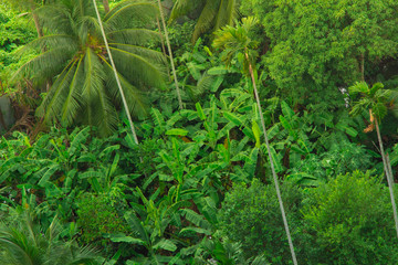 Banana trees and jungle flora covering the ground with a palm rising up from the corner in this concept photo.