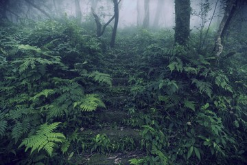 view of deep tropical forest, vintage filter image