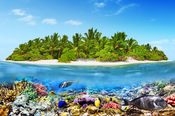 Wall Mural - Tropical island in Ocean and beautiful underwater world.