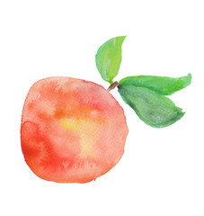 Peach. Watercolor painting.