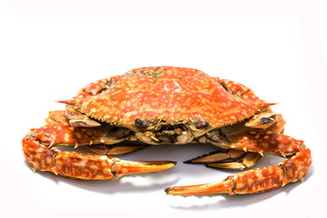 Cooked grill crab isolated on white.