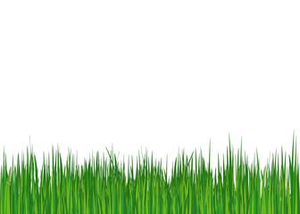 Grass. Summer (spring) background. Vector