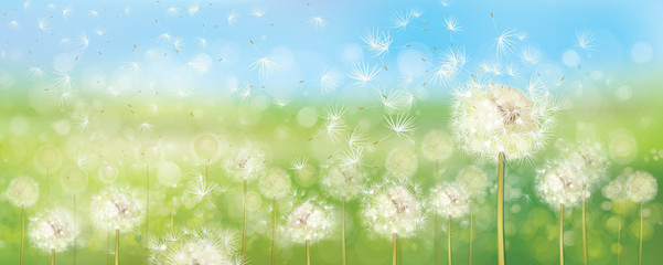 Vector spring  nature  background,  dandelions flowers field and  blue sky.