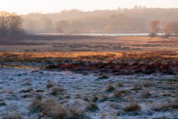 Frosty landscape in Richmond Park, London