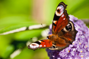 Beautiful butterfly on a branch of flowers.