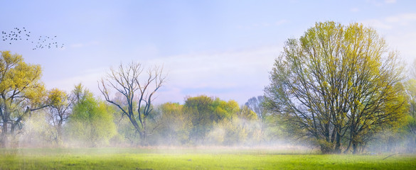 Fototapete - art Spring landscape; Easter background with blooming spring tree