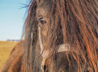 Pony Portrait Auge