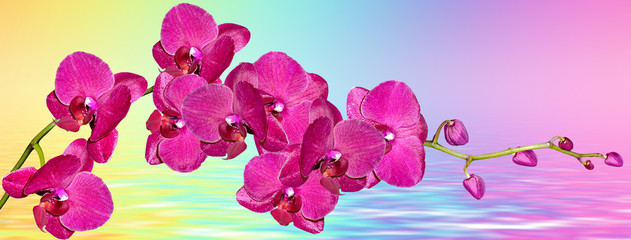 Foto op Plexiglas Roze Colorful bright orchid flowers on a background of the summer landscape.