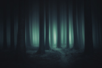 Fototapeten Wald dark and scary forest