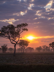 Tree Silhouette Against a Sunrise in Countryside