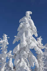 樹氷,雪景色