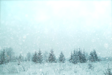 blurred background small Christmas trees with snow winter
