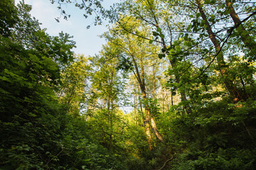 Tree tops are illuminated by the setting sun. Summer time. Dark forest. Clear sky