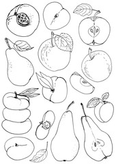 Set of fruits drawn a line on a white background. Sketch line. Apple, pear, peach