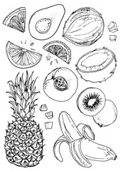 Set of fruit. Fresh food. Pineapple, coconut, peach, kiwi, avocado, lemon, orange, banana  line drawn on a white background. Vector illustration. Coloring for adults