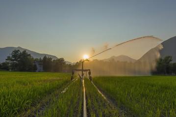 Irrigation of a field at sunset; Locarno, Ticino, Switzerland