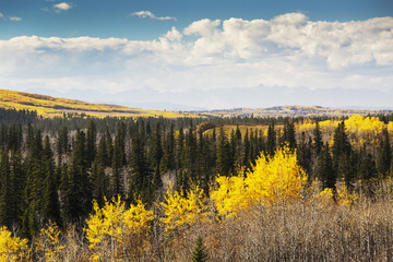 Autumn colours in treed valley with mountain silhoutte and clouds with blue sky; Calgary, Alberta, Canada