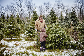 Father and daughter carrying cut down Christmas tree from a Christmas tree farm; Stoney Creek, Ontario, Canada