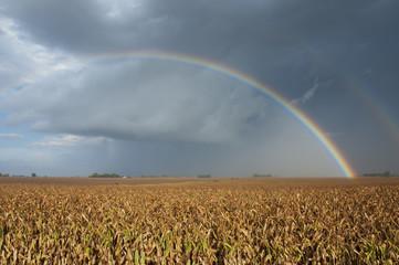 Corn harvest and rainbow; Minnesota, United States of America