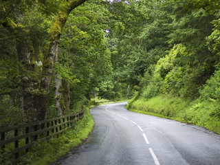 A road lined with lush trees and foliage and a wooden fence; Dunkeld, Perth and Kinross, Scotland