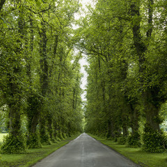 A road lined with lush trees and foliage; Dunkeld, Perth and Kinross, Scotland