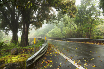 The road to Hana in rain; Maui, Hawaii, United States of America