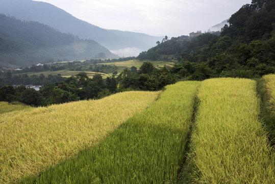Green plants growing in a valley; Thimphu, Bhutan