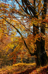 autumn forest in foliage