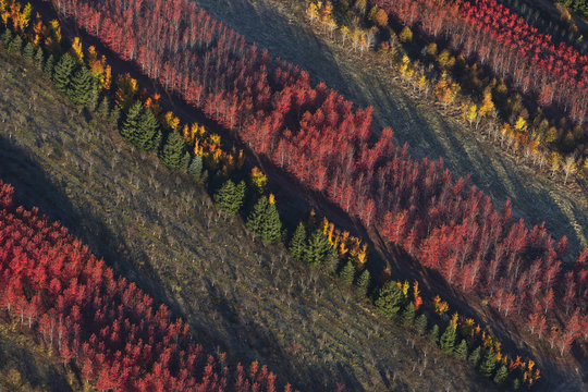 Aerial view of a tree farm in Isanti County; Minnesota, United States of America