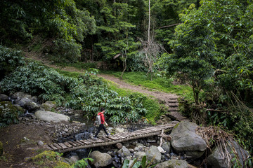 Young woman trekking in Faial da Terra; Sao Miguel, Azores, Portugal