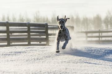 Dog running in snowy field