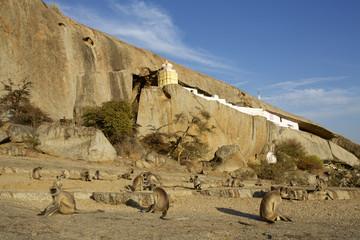 Monkeys and rural temple in Jawai Bandh Desert landscape, Aravali Hills