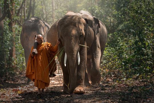 Monks elephant