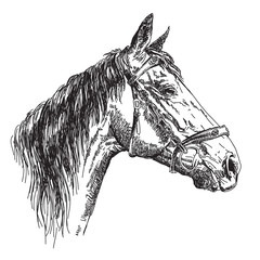 Horse head in profil with bridle vector hand drawing illustration