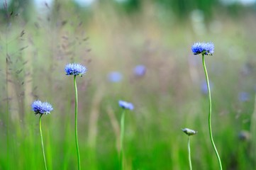 background field of spring flowers in blue