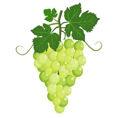 Fresh bunch of grapes green icon on white background. vector illustration in flat style.