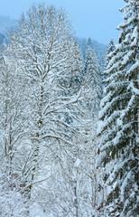 Winter Carpathian Mountains landscape.