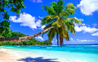 Fototapete - exotic tropical beach from dreams. Palm over turquoise sea