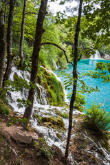 Streams of water between the trees, flowing into the turquoise lake. Plitvice, National Park, Croatia