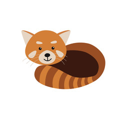 Red Panda isolated on white background