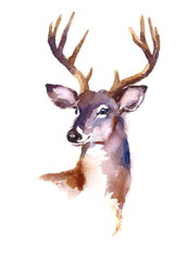 Watercolor Deer Hand Painted Illustration isolated on white background