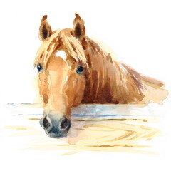 Watercolor Horse in the Stable Hand Painted Illustration
