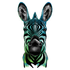 head of Zebra, vector color drawing, black, blue, and green