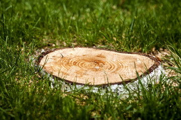 Stump of a cut down tree in green grass. Deforestation problem concept.