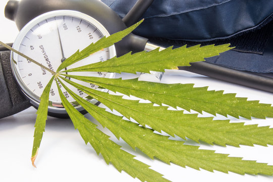Cannabis or marijuana and blood pressure. Green cannabis leaf lies near measuring scale of sphygmomanometer and inflated cuff. Concept of marijuana influence on decrease or increase of blood pressure