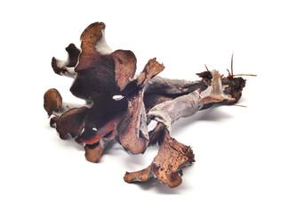 craterellus cinereus mushroom